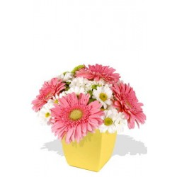 Mixed Chrysanthemum and Gerbera Bouquet